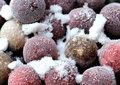 Freezer-Baits